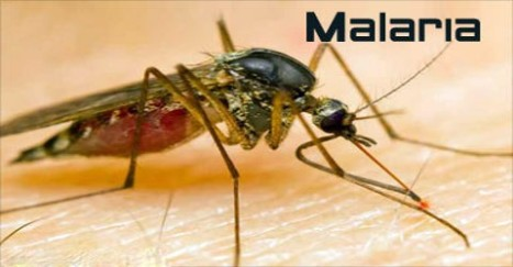 About-Malaria