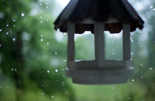 rainy-may-day-birdfeeder