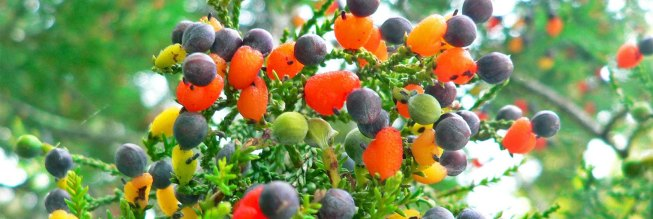 Sam-Van-Aken-Tree-of-40-Fruit-1580x530